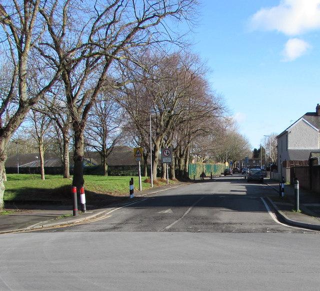 Deciduous trees alongside Marion Street, Newport