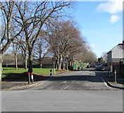 ST3186 : Deciduous trees alongside Marion Street, Newport by Jaggery