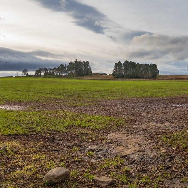 Field below Craggie Farm