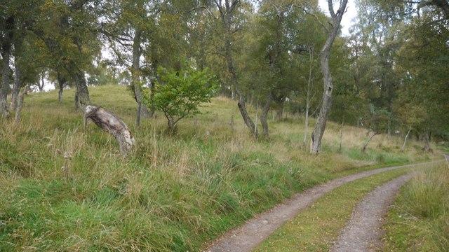 Track to Croft Kincardine