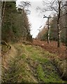 NH9252 : Track in Arr Wood by valenta
