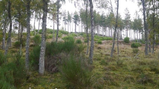 Woodland, Kincardine by Richard Webb
