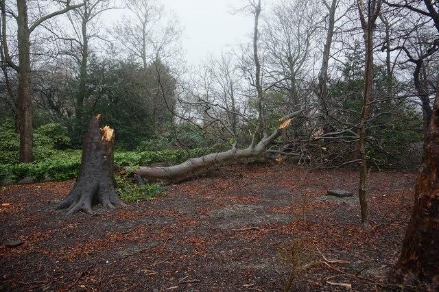 Storm Ciara damage at Holderness House, Hull