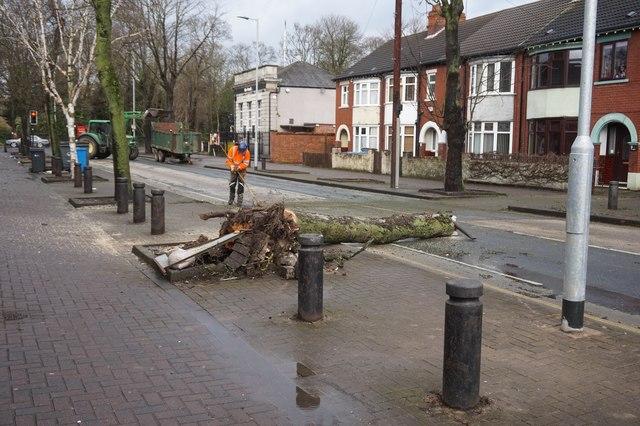 Storm Ciara damage tree on Southcoates Lane, Hull