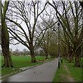 TL4559 : Jesus Green: a gap in the avenue by John Sutton
