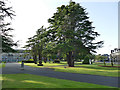 NT2791 : Trees in the grounds of Kirkcaldy museum by Stephen Craven