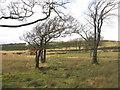 NS9870 : Rough grassland in the Bathgate Hills by M J Richardson