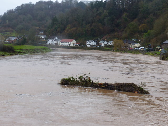 Swollen River Wye carries a tree trunk downstream