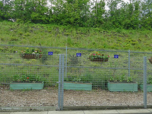 Gorebridge station - secure planting