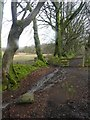 SX5894 : Stream and tree-covered hedgebank near Okehampton Golf Course by David Smith