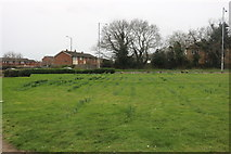 TQ6479 : Green by Brentwood Road, Chadwell St Mary by David Howard