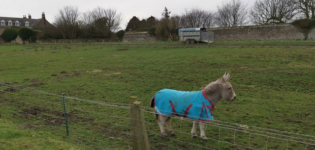 Little donkey at Goswick