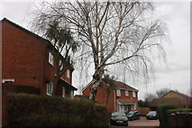 TQ6177 : Houses on Bridge Road, Grays by David Howard