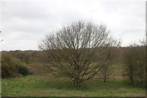 TQ5185 : Eastbrookend Country Park, Elm Park by David Howard