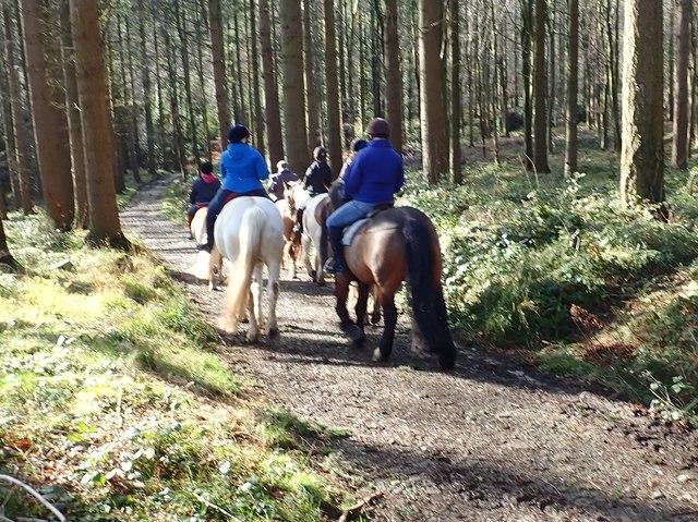 Pony trekking in Tollymore Park