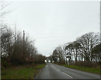 SS6846 : Hedge and trees lining A39 near Woody Bay station by David Smith