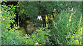 SS2104 : River Neet at Rodd's Bridge by Derek Harper