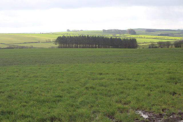 Field, next to B4338, and conifer plantation
