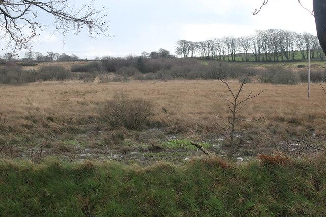 Rough pasture, Corsgoch (2)