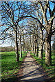 TQ2276 : Tree lined footpath on Barnes Common by Des Blenkinsopp