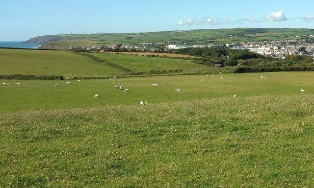 Sheep, Lynstone