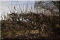 SK1106 : Signs of Spring by Martin Richard Phelan