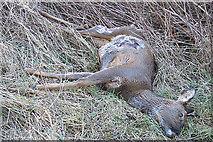 NJ1366 : Oh Deer! by Anne Burgess