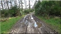 NJ1566 : Muddy Road by Anne Burgess
