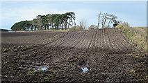 NJ1464 : Wet Field by Anne Burgess