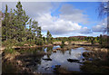 NH4657 : Boggy forest, above Loch Kinellan by Craig Wallace