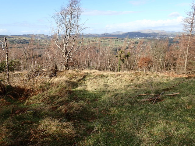 The forest-grassland boundary on the slopes of Curraghard Mountain