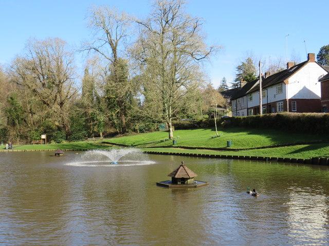 Ducks on the pond, Southborough