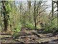 TQ5638 : Muddy paths near Tunbridge Wells by Malc McDonald