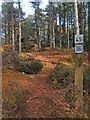 NH6548 : Orienteering course marker post, Ord Hill, Inverness-shire by Claire Pegrum