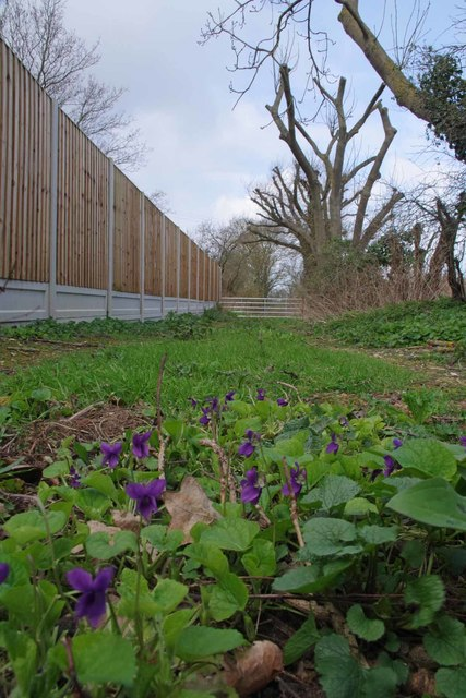 Violets and PROW 213_17