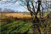 H5172 : Rough ground, Cloghfin by Kenneth  Allen