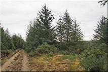 NJ4848 : Missing Waymarker by Anne Burgess