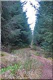 NJ4750 : Path to Gardenhead by Anne Burgess