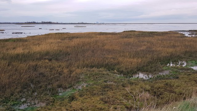 Kirby-le-Soken: Salt marsh and creeks north of Peter's Point