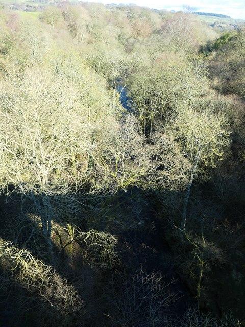 The River Balder amongst the trees
