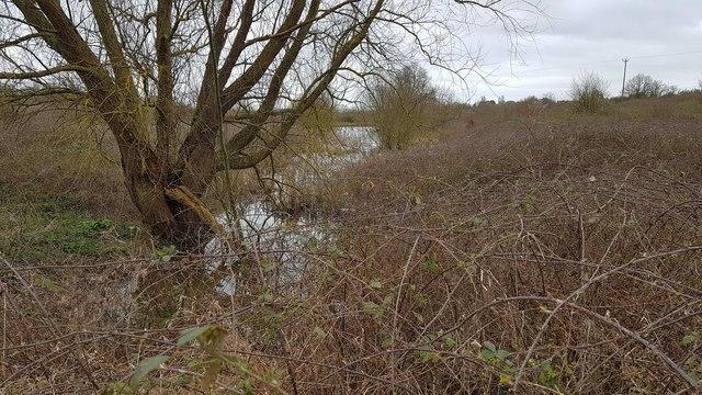 Thorpe-le-Soken: Lowest of the Thorpe Hall ponds