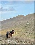SN9817 : Mountain pony by Alan Hughes