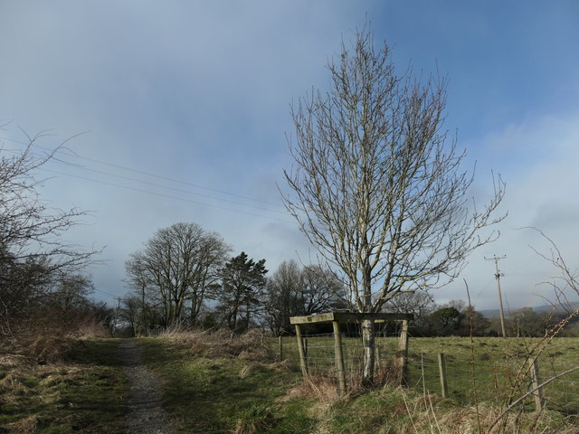 A protected young tree on the Tees Railway Path