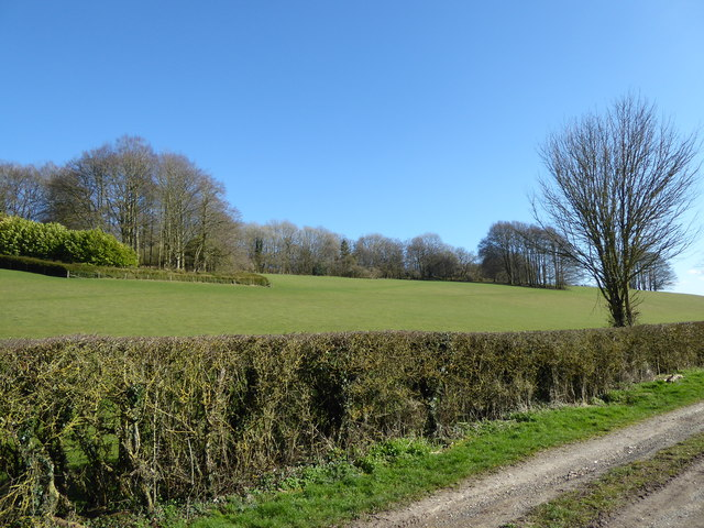 The flank of Membury hillfort