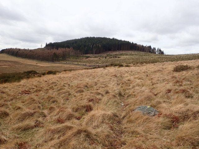 View NNW across the frith in the direction of the forest clad The Drinns