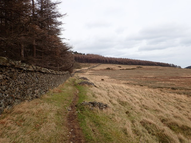 View East towards Curraghard along the southern boundary wall of Tullymore Forest Park
