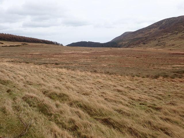 The upper margin of the Tullybranigan Wet Land