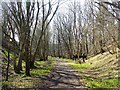 NY6759 : South Tyne Trail near Coanwood Station by Oliver Dixon