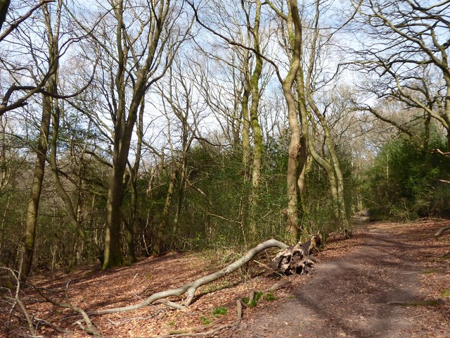 Path through Weydown Common