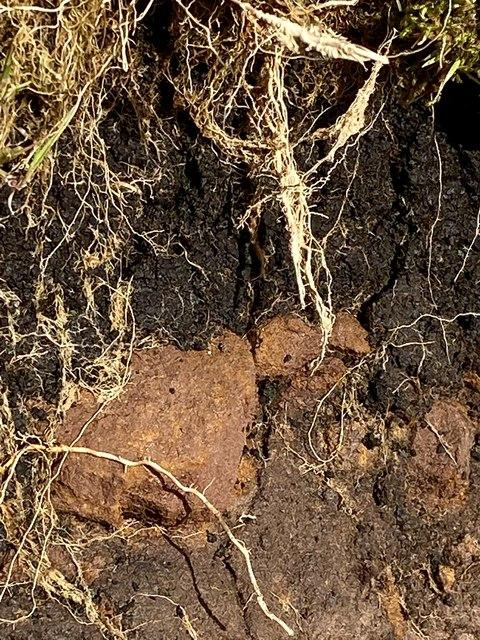 Peat and sandstone